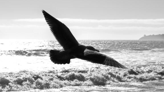 fly free like a bird