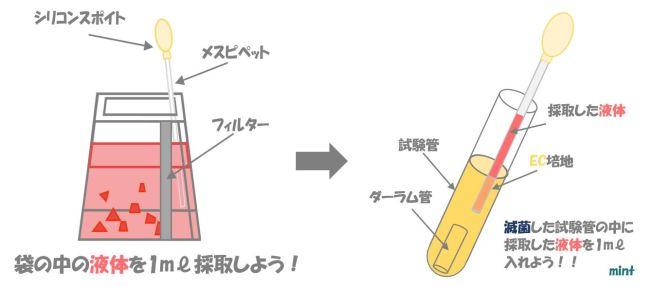 大腸菌の検査③
