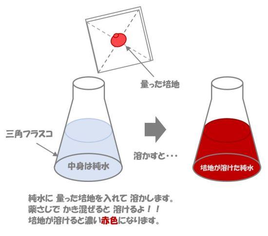 黄色ブドウ球菌の検査②