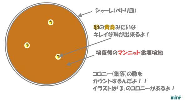 黄色ブドウ球菌の検査⑥
