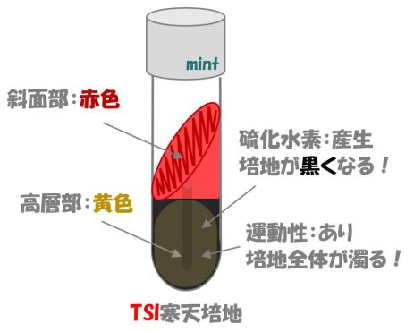 TSI検査④