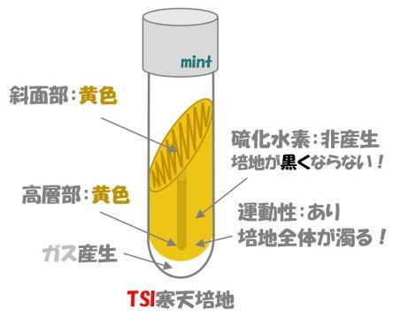 TSI検査⑥