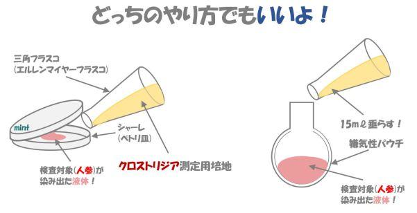 クロストリジウムの検査.④