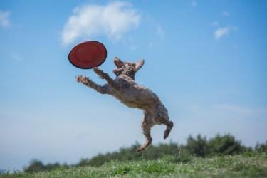 ポップステップジャンプは【ぴょんと飛ぶ、一歩歩く、ジャンプする】