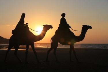キャメルとキャラメル【camel】【caramel】