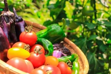 オーガニック野菜の「オーガニック」は、英語の【organic:有機農法の】