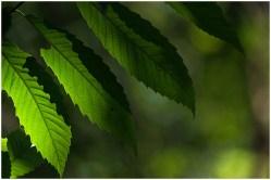 groene-bladeren