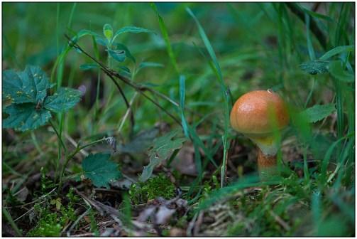 fungi-jd-03
