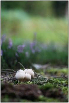 paddenstoelen-01