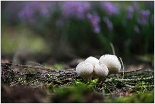 paddenstoelen-02