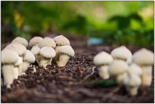 paddenstoelen-13