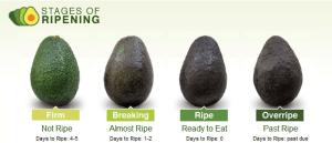 avocado kiezen op kleur en uitzicht