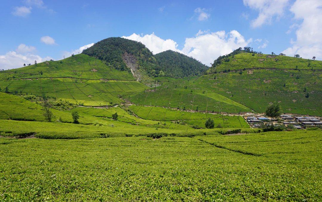 Theeplantages-Bandung