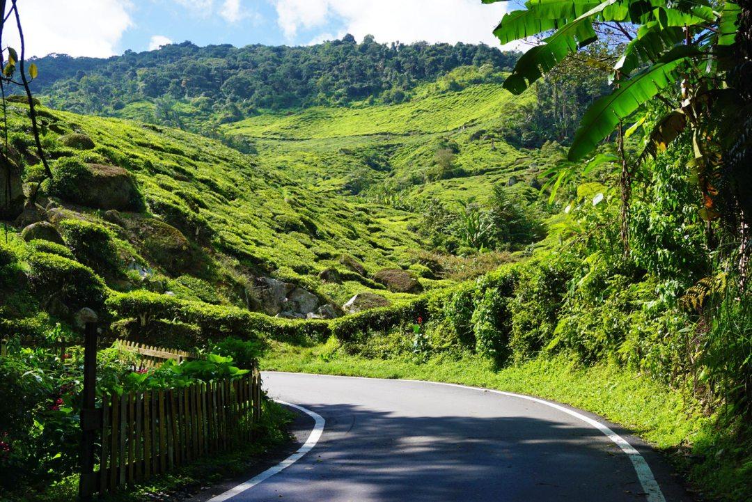 Cameron-Highlands-Maleisie