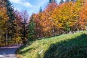 herfstkleuren, bos, bron M. Koghee, MijnSlovenie