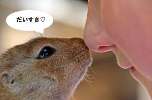 鼻にキスするリス