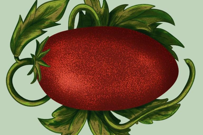 tomato_Gridelli_big