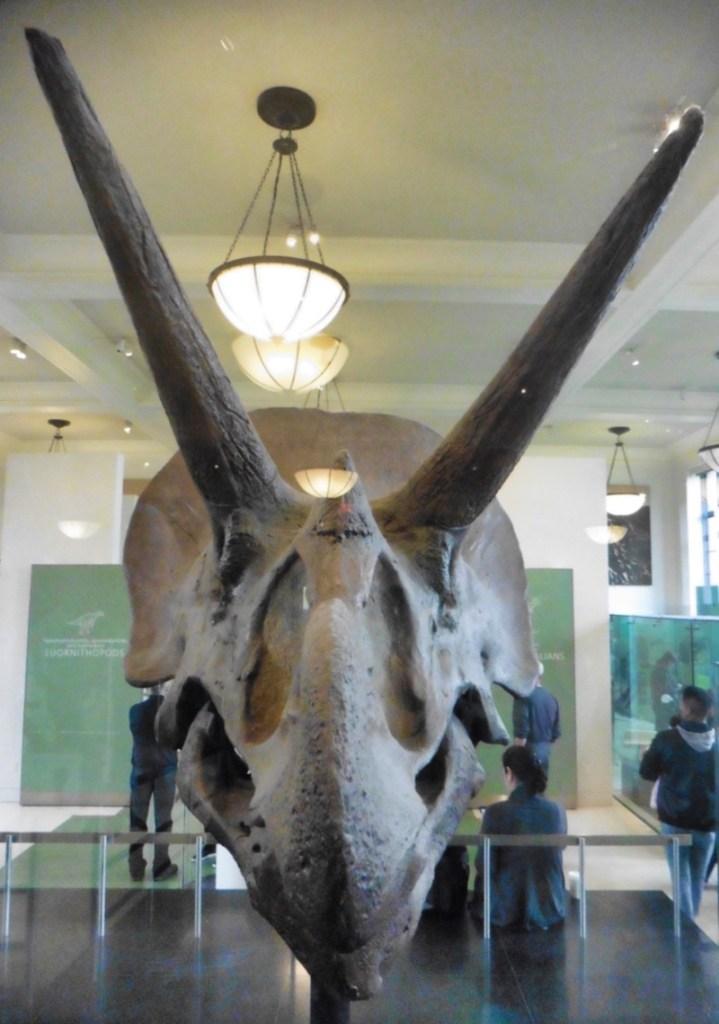 museum d'histoire naturelle