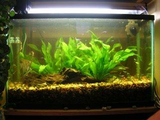Heavily pruned live plant aquarium to remove algie and damaged foliage