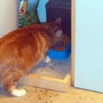 Cat Food Tray