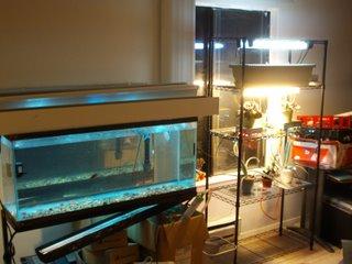 Aquarium and plant stand