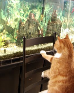 The cat getting ready to make his next aquarium chess move
