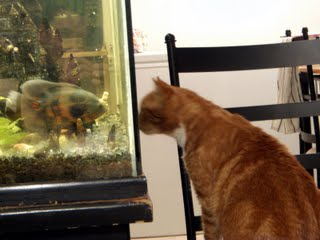 The Oscar vs the Cat in an epic aquarium chess battle!