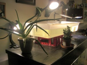 The aquaponics ebb and flow growbed sitting on the aquarium light hood