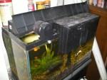 Aquarium Filtering