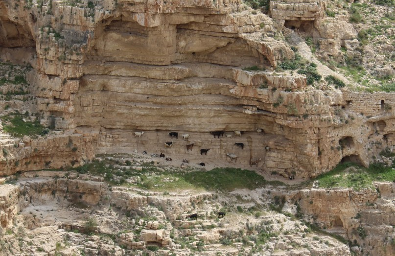 sheep graze on a wall of a canyon
