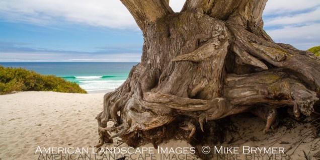 Carmel Beach-4830