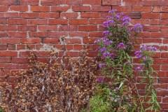 Flowers Against Break Wall in Saint John Photograph