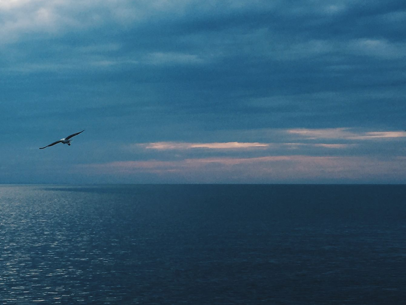 Click thumbnail to see details about photo - Prince Edward Island Stock Photo Bird Flying Stock Photo