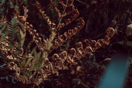 A photo of Dead Fern