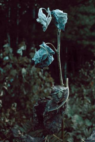 A photo of Dying Plant Vertical