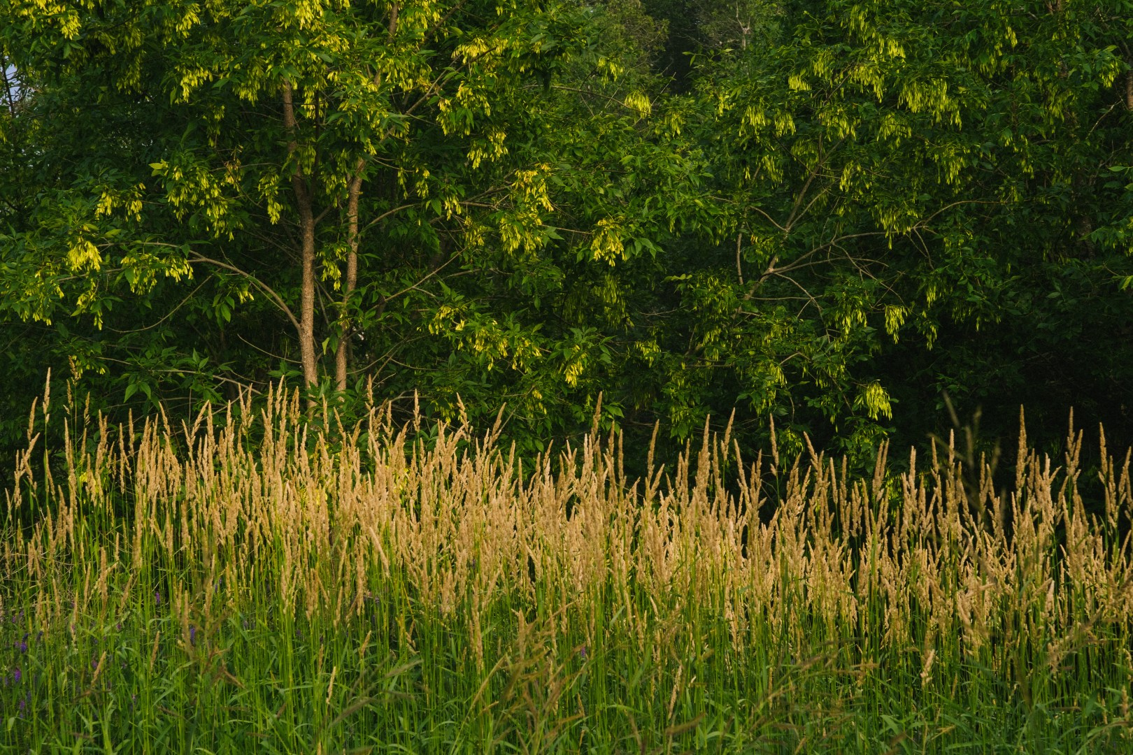 A photo of Natural Gradient Grass