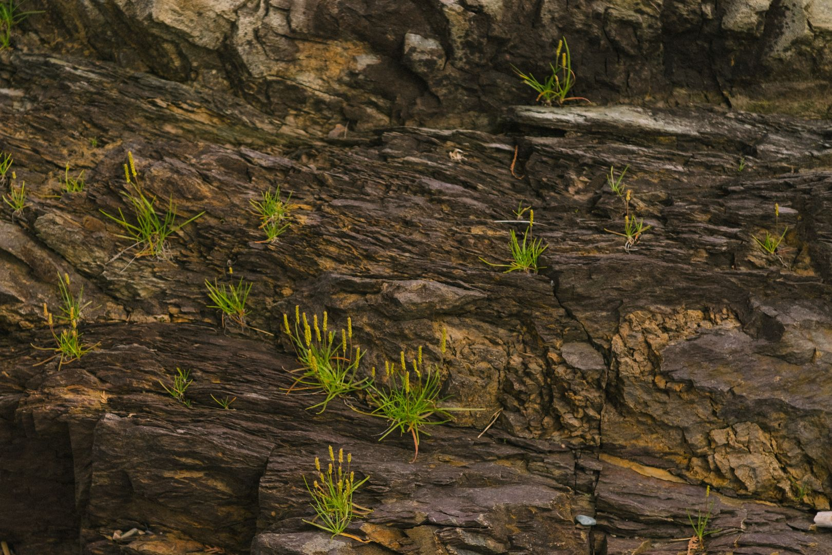 A photo depicting Rock Face with Green Plants