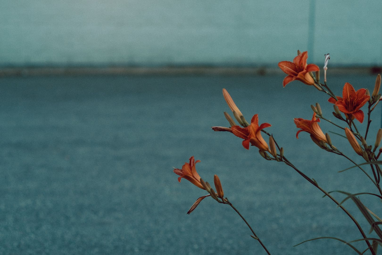 A photo depicting Urban Flowers Less Background