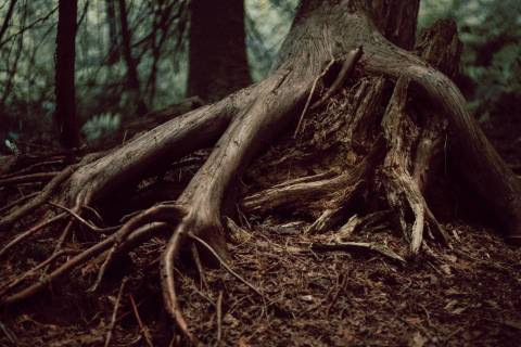 A photo of Exposed Tree Roots