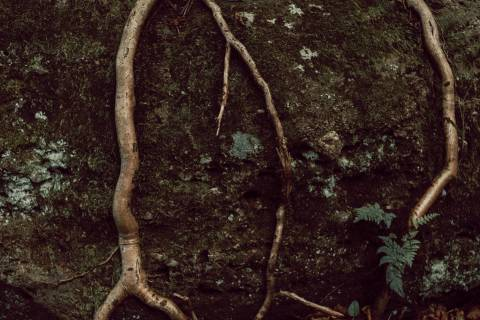 A photo of Tree Roots On Rock