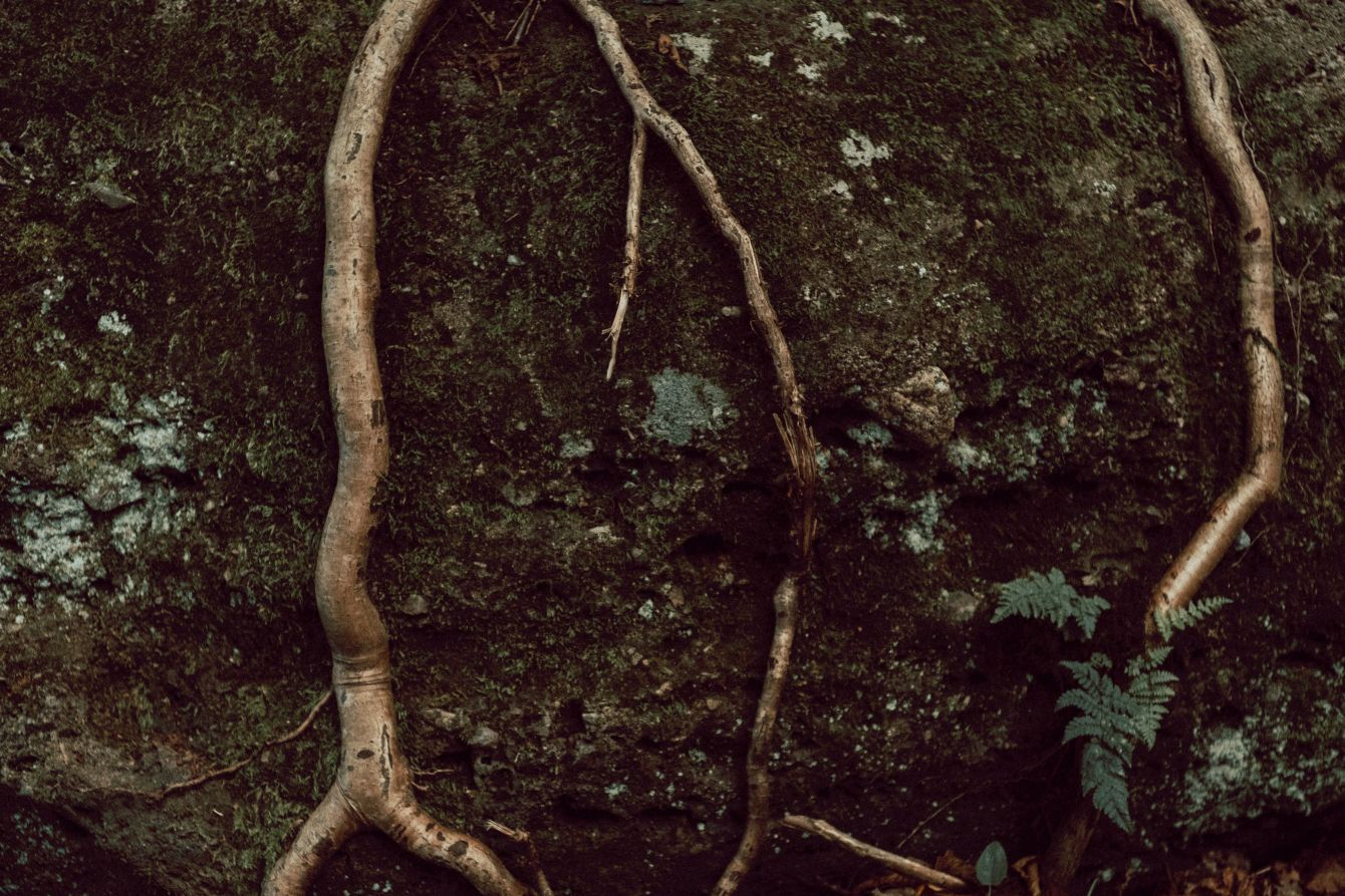Click thumbnail to see details about photo - Tree Roots On Rock