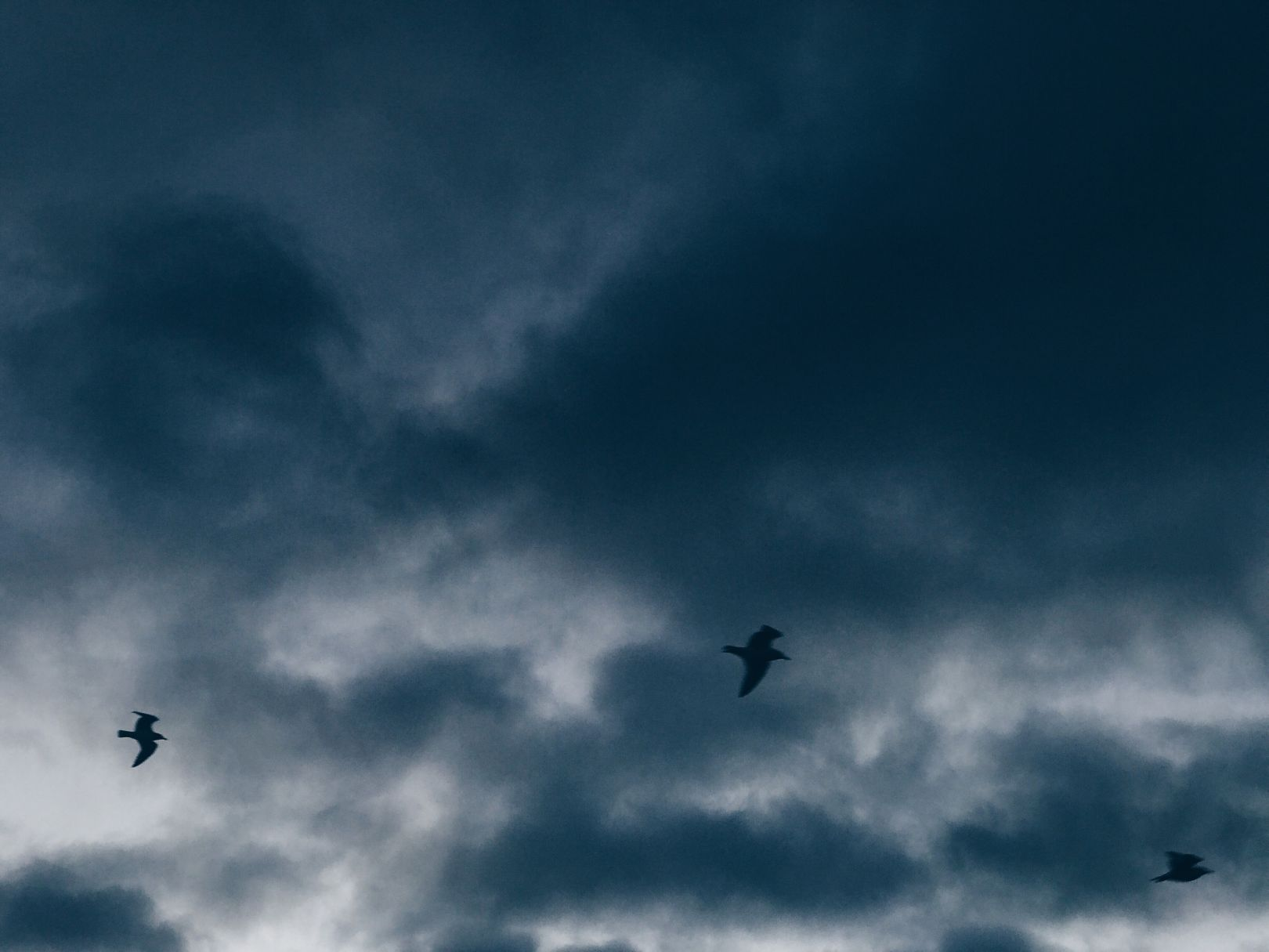A photo depicting A few birds fly against a moody blue sky