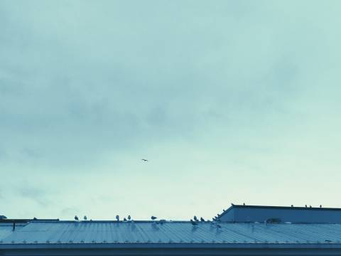 A photo of A flock of birds resting on an blue aluminum roof