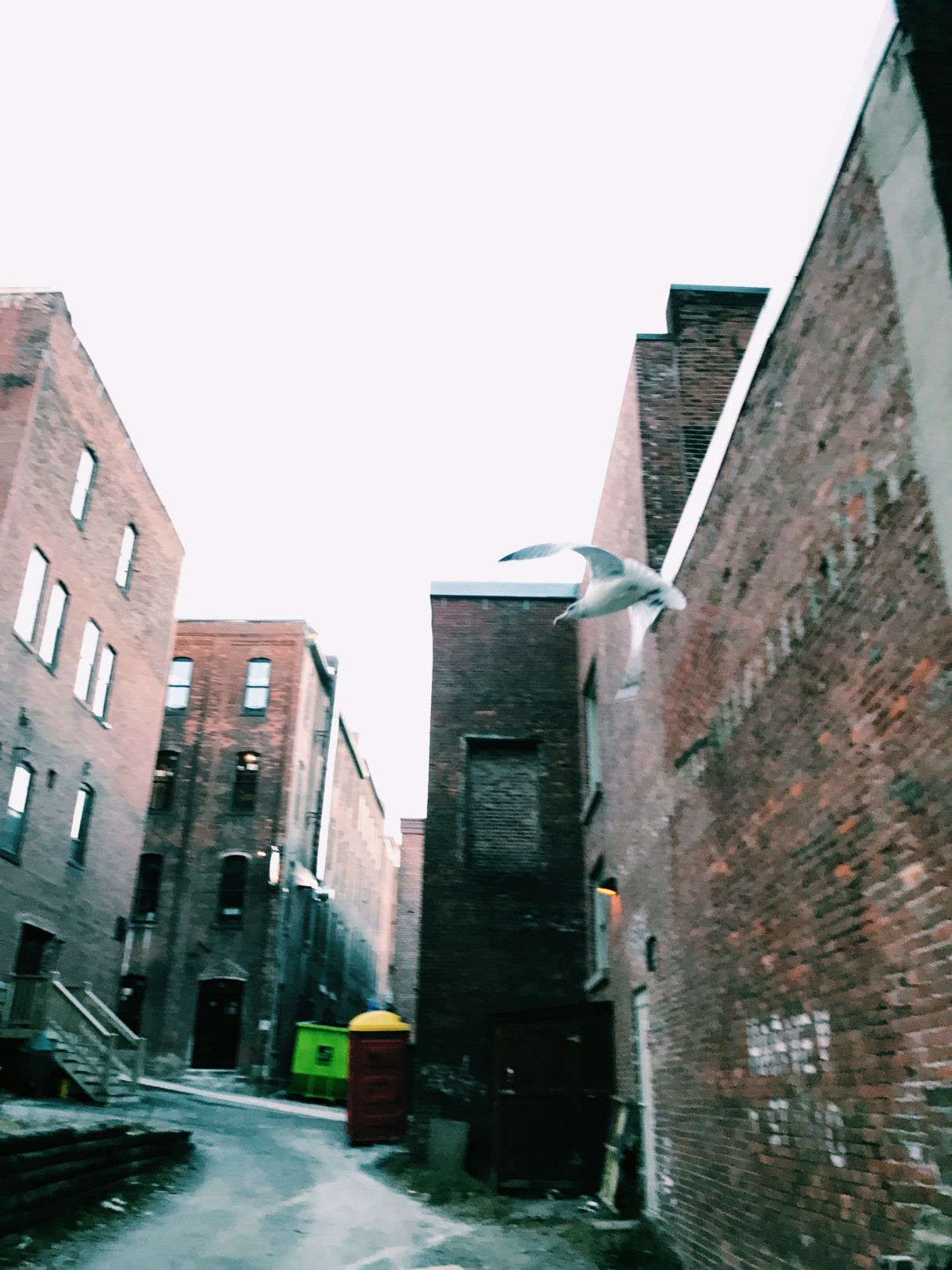 A photo depicting A seagull flying in an alleyway