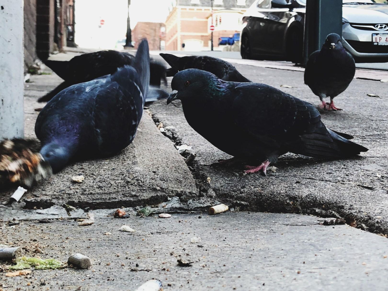 A photo of Birds 21 1