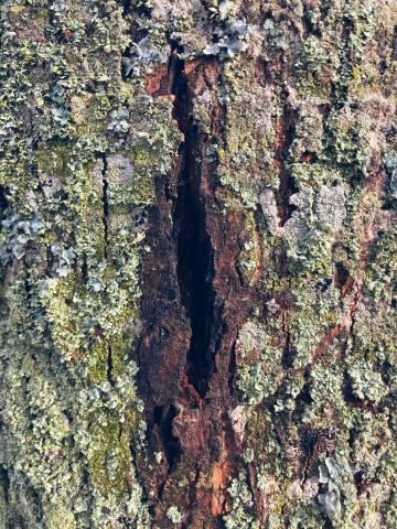 A photo of mossy bark hole