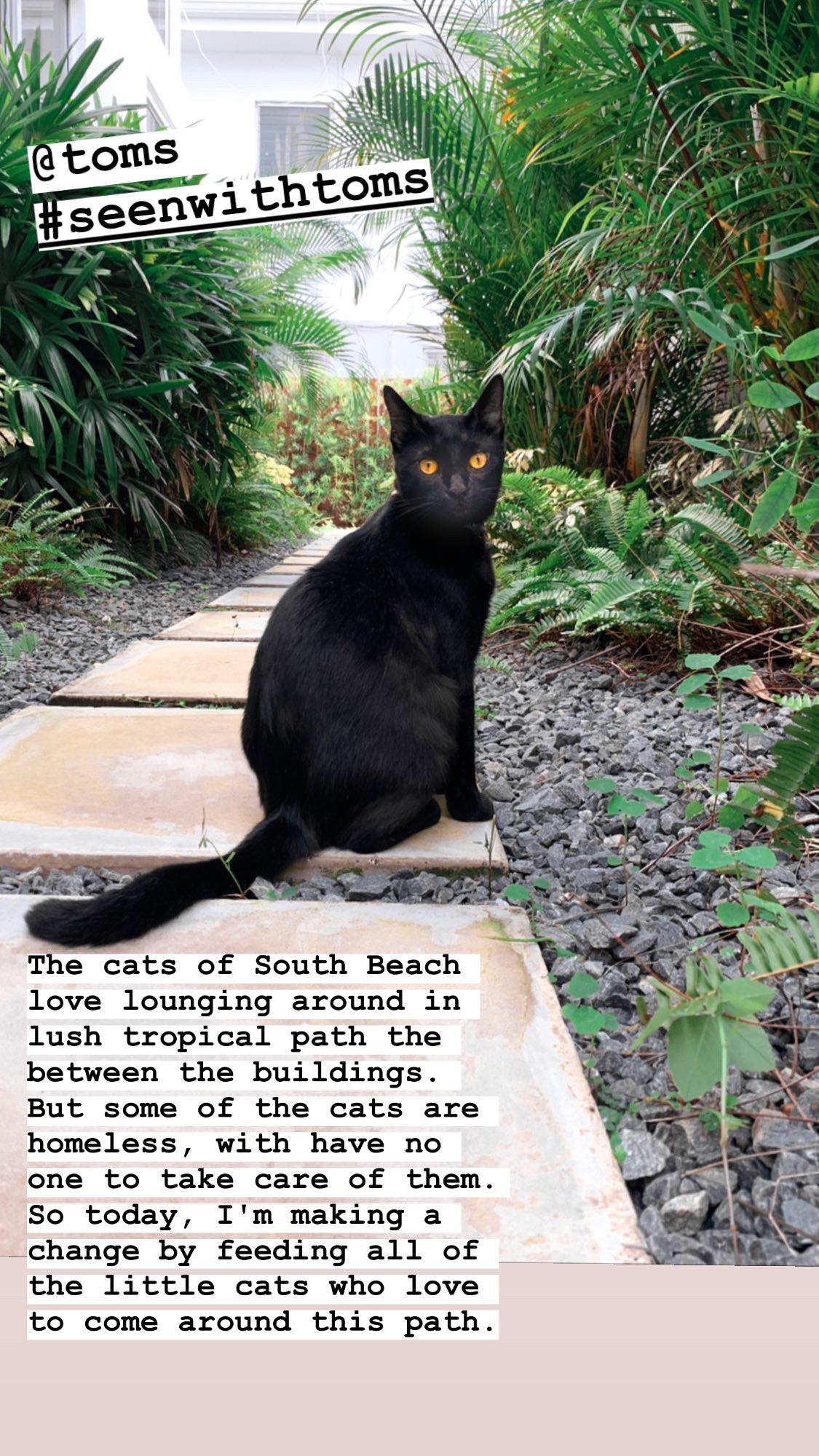 black cat in miami beach