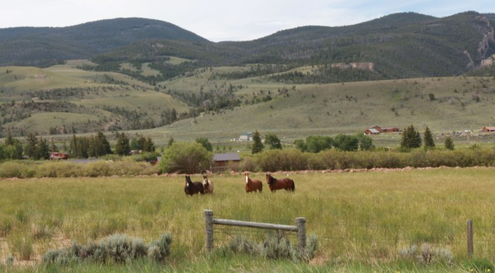 A quartet of horses are very interested in our progress. -- West of Dubois, Wy