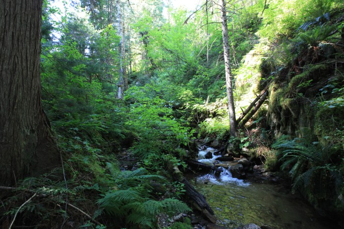 Just 20 feet off the road at Rye Patch Creek -- Clearwater National Forest