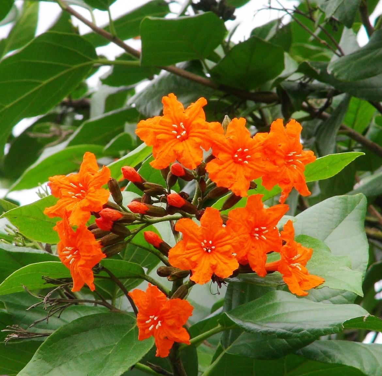 Orange Geiger